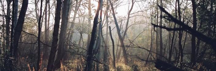 bosque-misterioso-e1459877982602.jpg