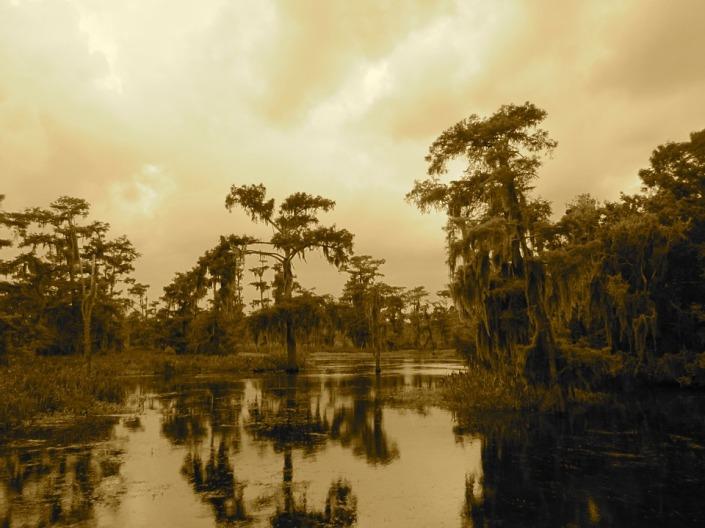 swamp-2344434_960_720.jpg