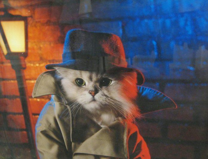 gato_detective-696x531