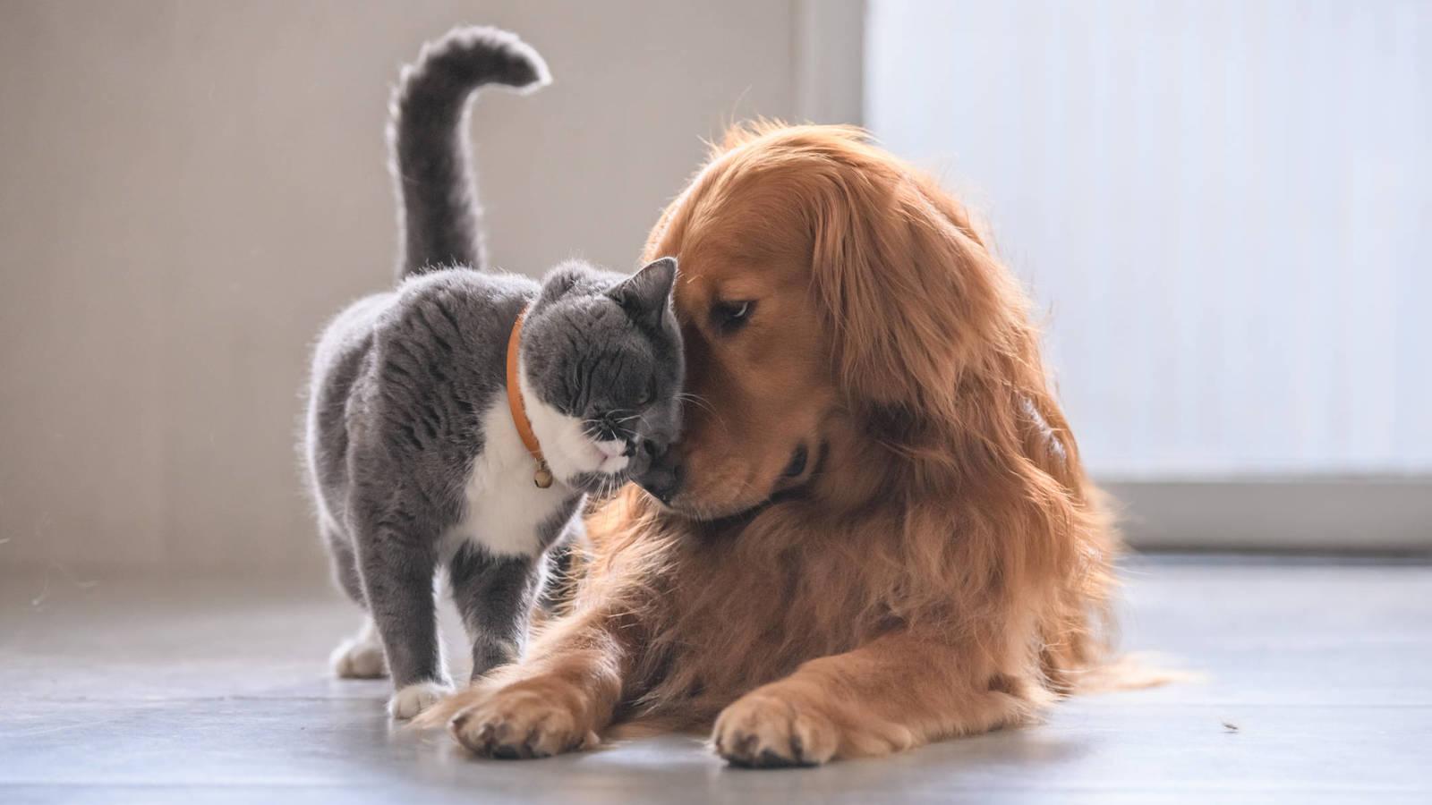puedes-alimentar-a-tus-perros-y-gatos-con-una-dieta-vegana