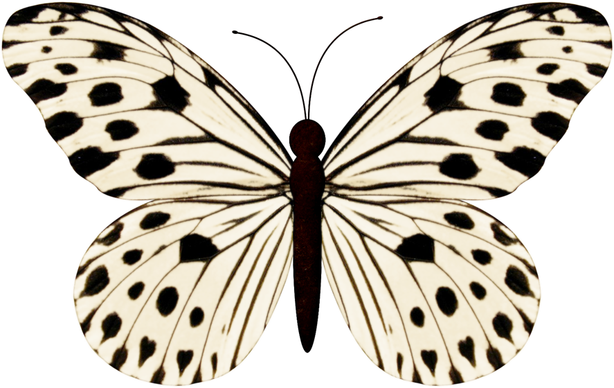 161-1616134_de-oruga-a-mariposa-besos-de-mariposa-alas